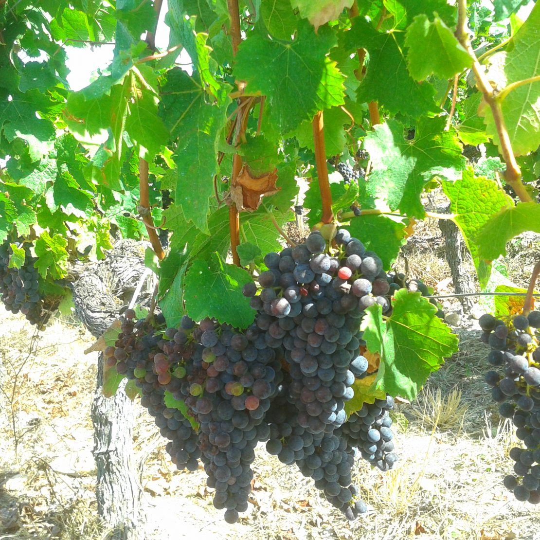vignoble de saint-emilion wine tour Bordeaux tour des vignobles bordeaux