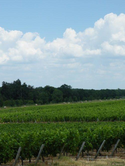 vignoble de saint-Emilion  wine tour à Saint-Emilion  la route du vin de Saint6Emilion