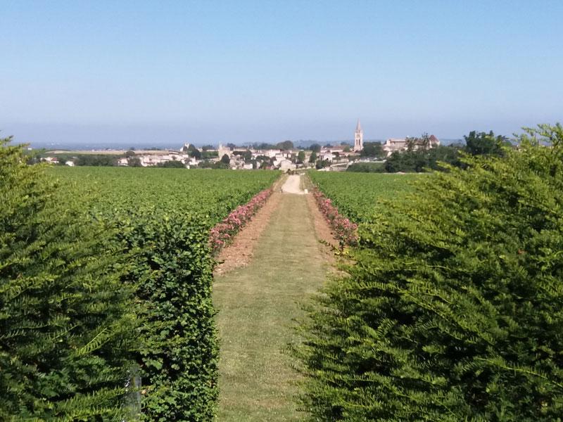 Saint-emilion-tour-apres-midi-4